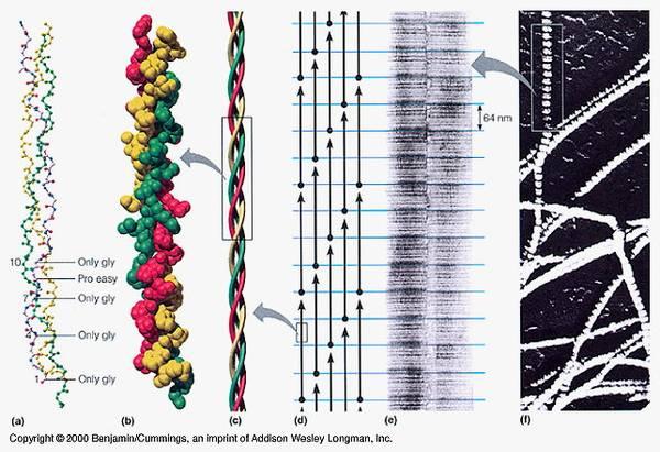 Kollagenstruktur